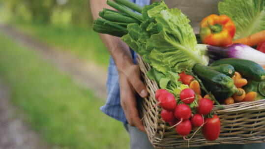 What about a vegetable garden this fall?