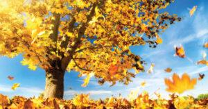 Quoi faire avec vos feuilles mortes