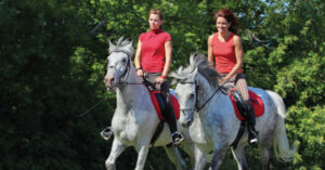 Passion for horses in Québec